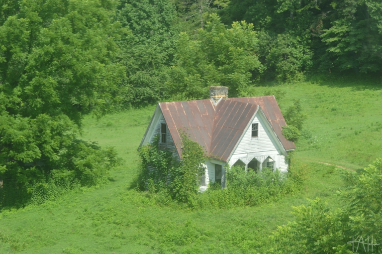 a house that's surrounded and almost engulfed by greenery -- bad real estate, lovely photography.