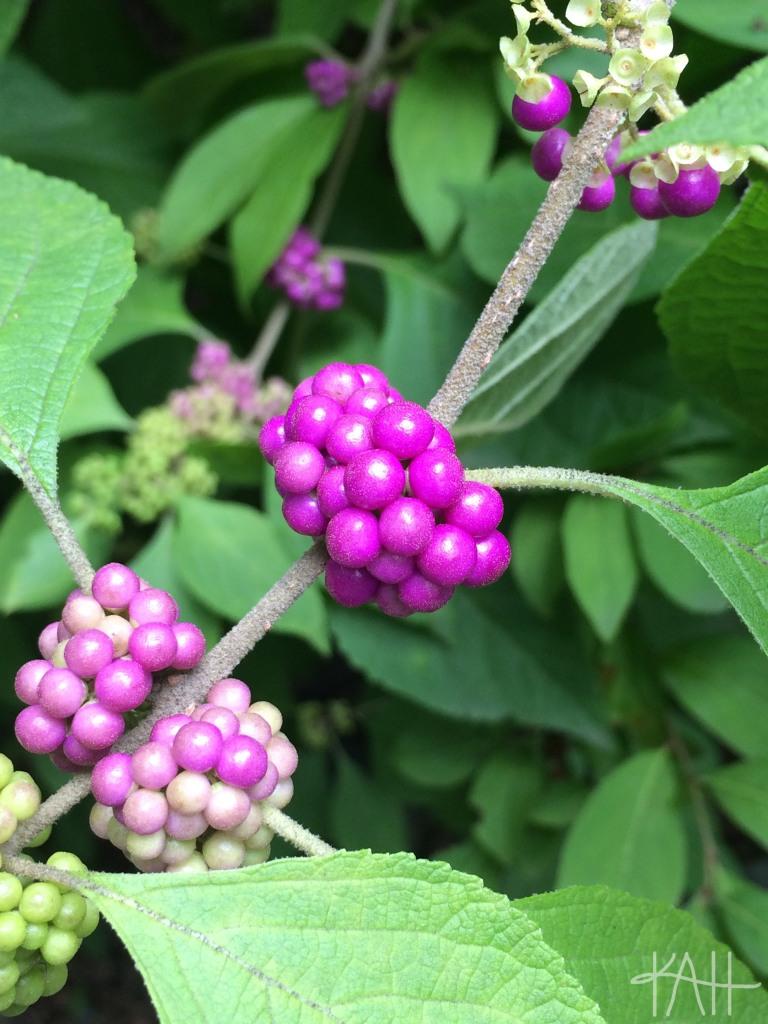 August 2015, UNCC Botanical Gardens. (on iPhone)
