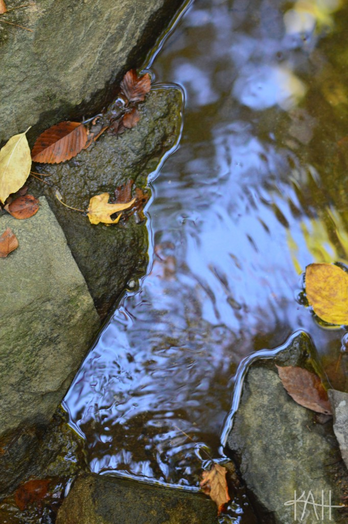 I was so happy to capture this stream's movement! The edges that separate the water and the rocks make the picture look fake, don't they?