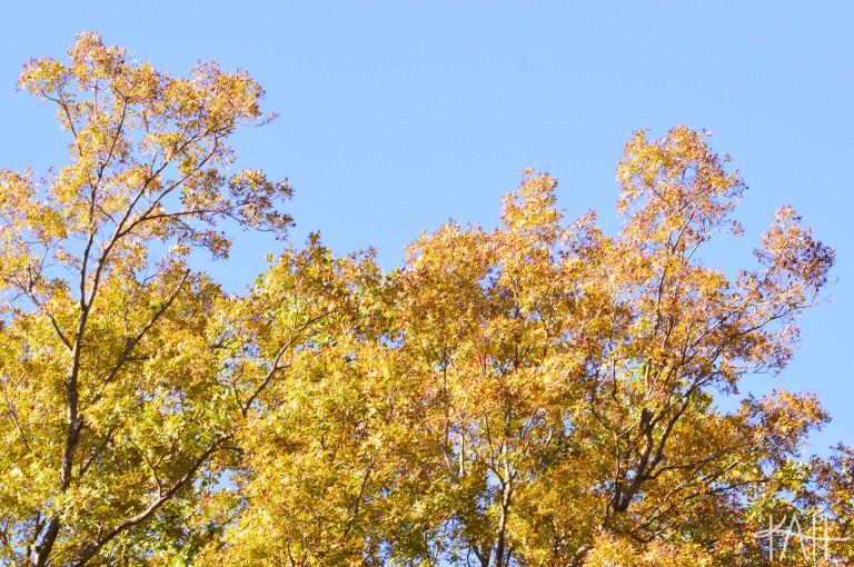 No, it's just North Carolina. Botanical Gardens, UNCC (Oct. 17th)