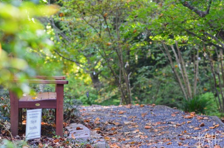 Take a seat. Botanical Gardens, UNCC (Oct. 17th)