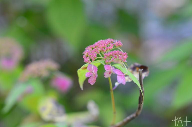 Wait, is it springtime?! Botanical Gardens, UNCC (Oct. 17th)