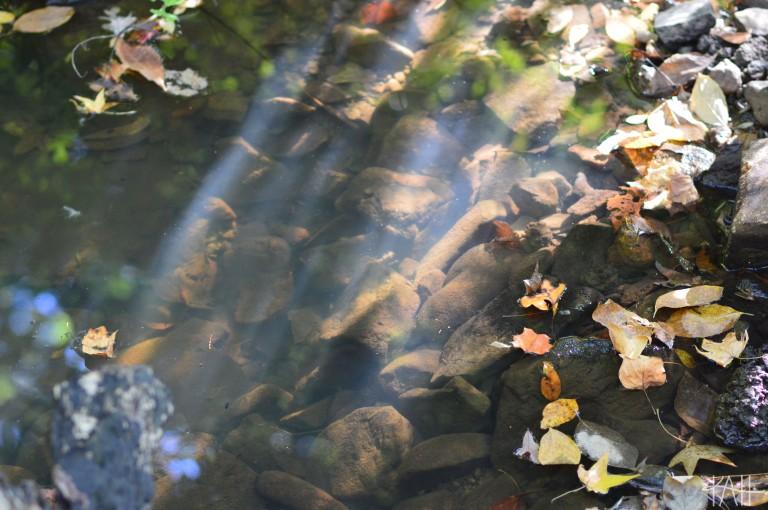 Natural spotlight. Botanical Gardens, UNCC (Oct. 17th)
